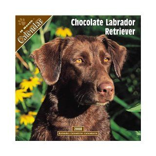 chocolate Labrador Retriever 2008 Wall Calendar Pet Prints 9781846622670 Books