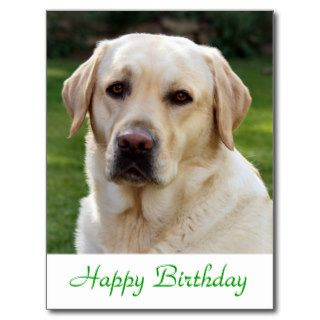 Happy Birthday Labrador Retriever  Dog Post Card