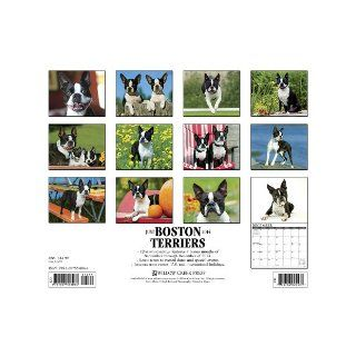 Boston Terriers 2014 Wall Calendar Willow Creek Press 9781607558064 Books