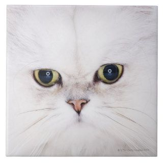 Studio shot of white Persian cat Ceramic Tile