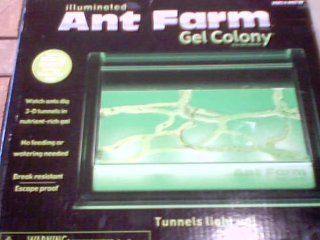 2008 Uncle Milton Industries, Inc. Uncle Milton Illuminated Ant Farm Gel Colony Live Ant Colony #1451   watch Ants Dig 3 d Tunnels Innutrient rich Gel   no Feeding or Watering Needed   break Resistant/escape Proof   tunnels Light Up   ant Farm Brand Gel C