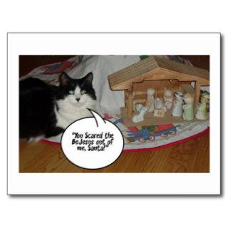 Christmas Black and White Cat Humor Post Card